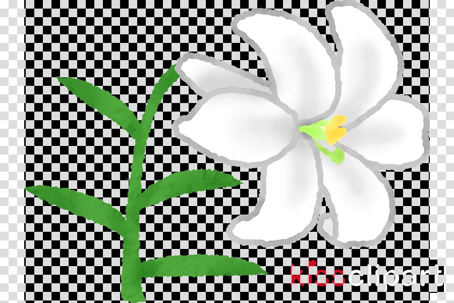 flower plant petal leaf pedicel