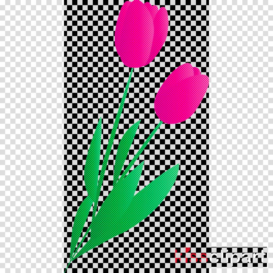 tulip flower pedicel plant petal