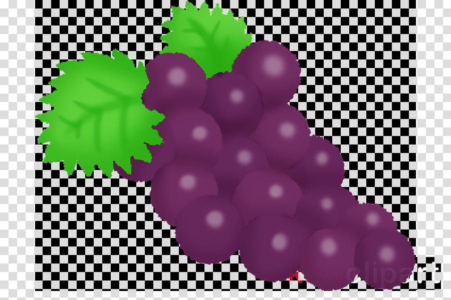 grape grapevine family leaf seedless fruit fruit