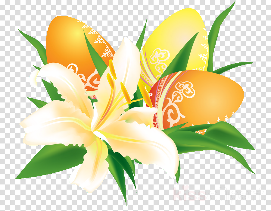 flower plant lily petal lily family