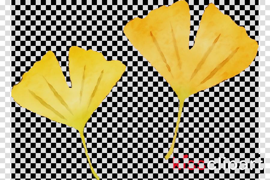 yellow leaf flower plant petal