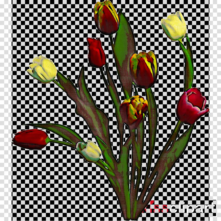 flower tulip plant bud cut flowers