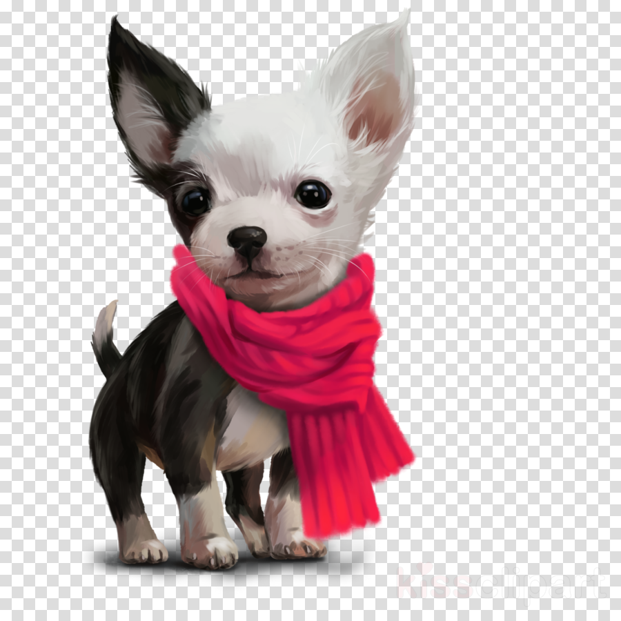 dog dog clothes puppy chihuahua companion dog