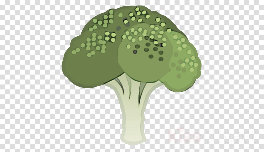 broccoli leaf plant tree flower