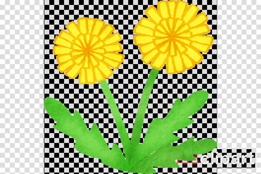dandelion chrysanthemum plant stem cut flowers pot marigold