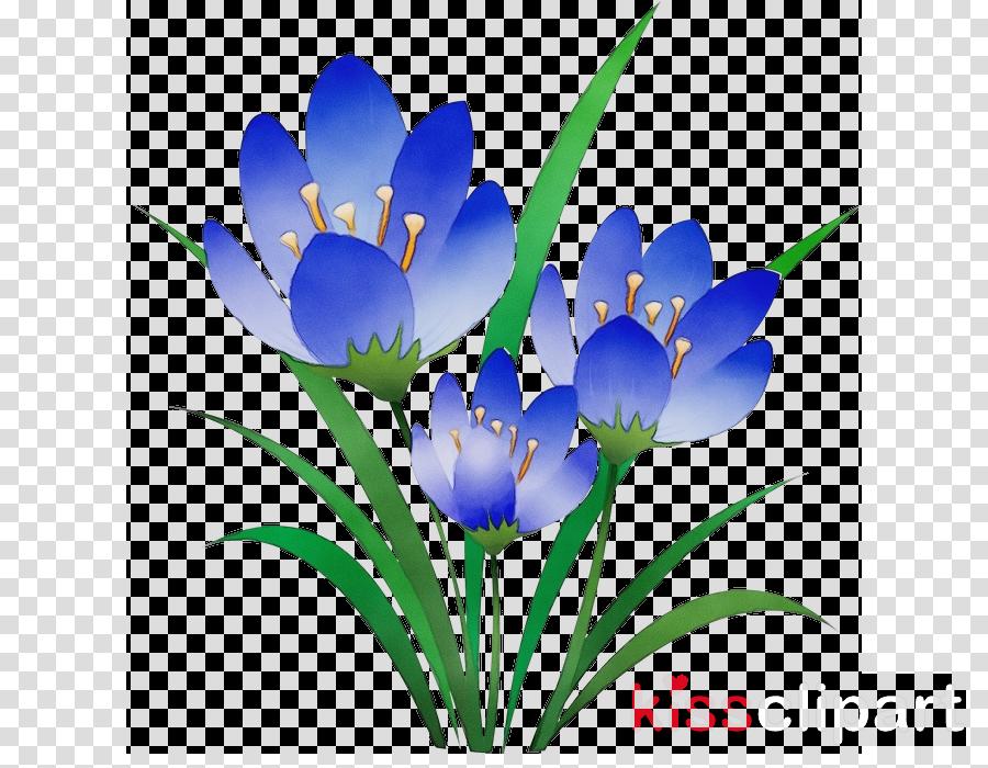 plant stem crocus tulip herbaceous plant crocus m