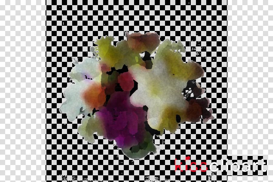 violet violaceae