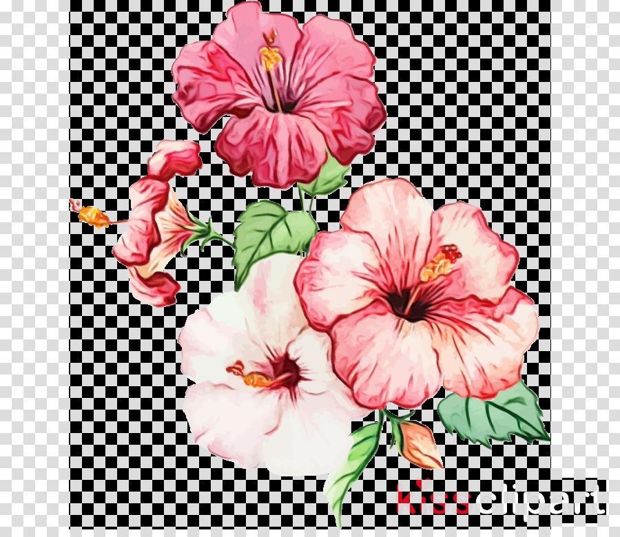 watercolor painting shoeblackplant common hibiscus hawaiian hibiscus painting