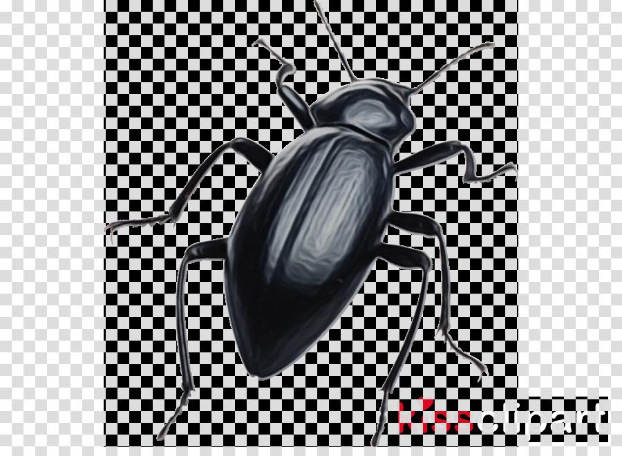 scarabs ground beetle dung beetle scarabaeiformia stag beetle