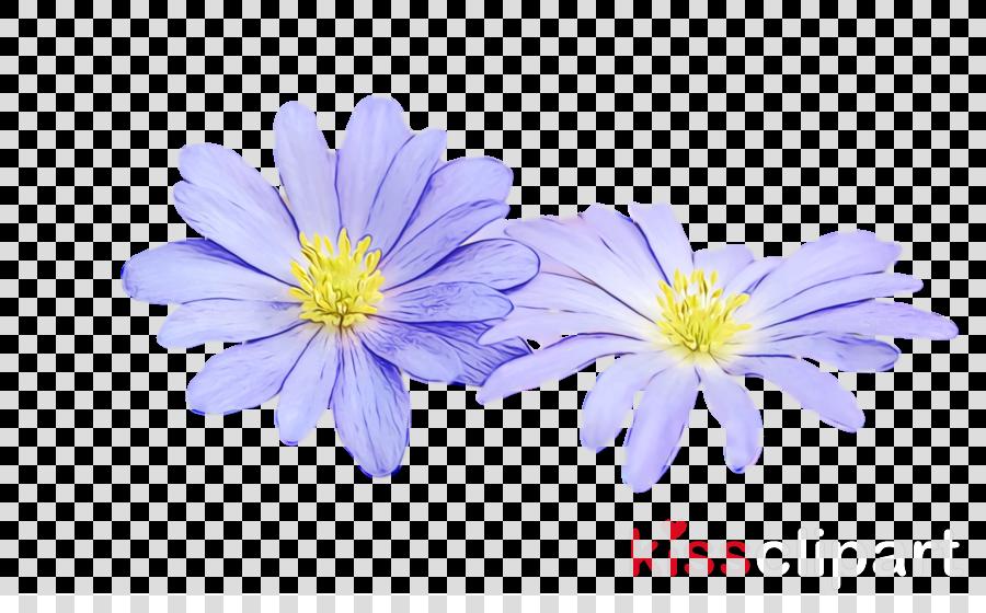 chrysanthemum petal computer m