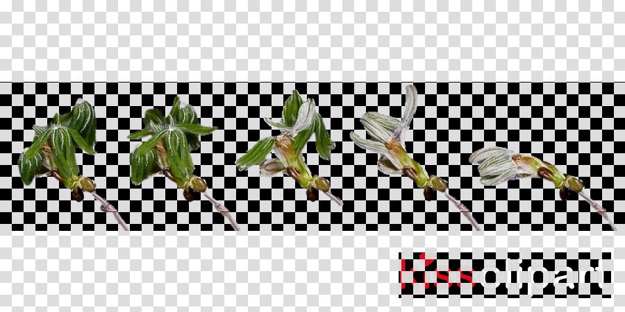 plant stem leaf grasses flower cut flowers