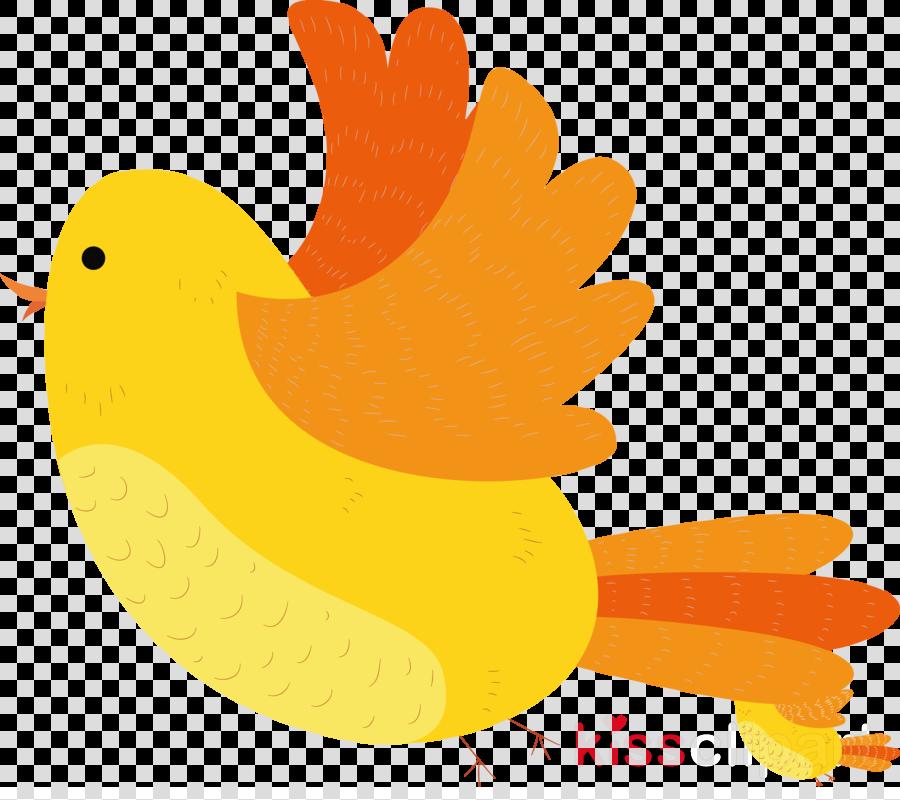 chicken ducks water bird birds beak