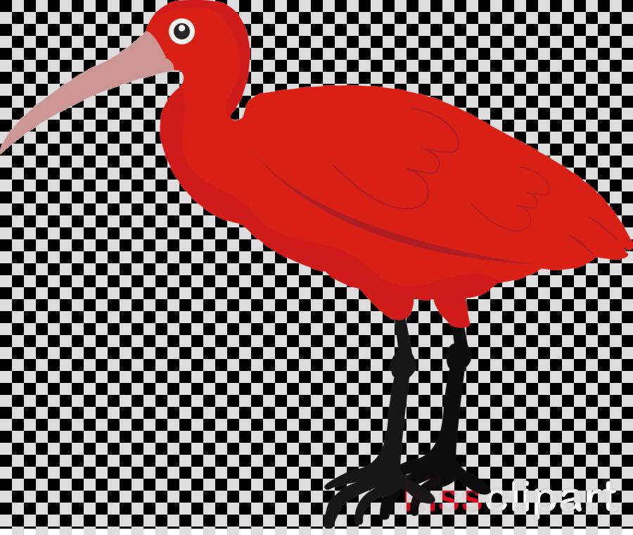 ibis birds water bird beak science