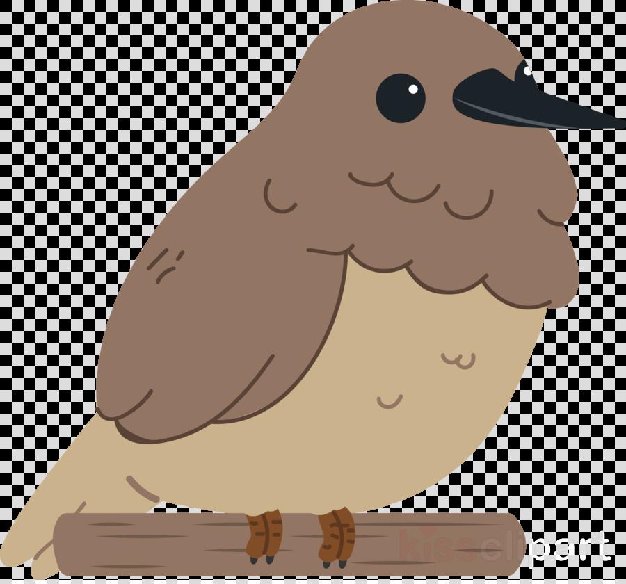 owls birds beak flightless bird water bird