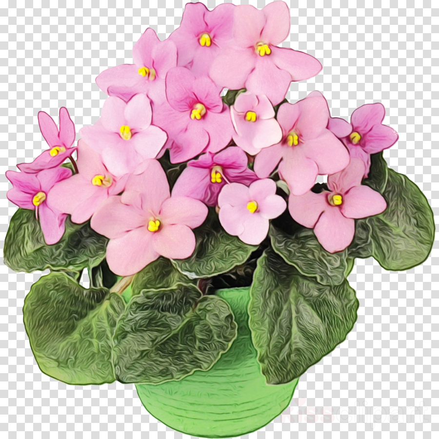 violet gift flower surprise spring
