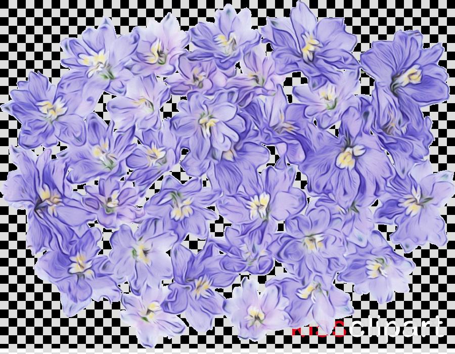 hyacinth cut flowers larkspur blog petal