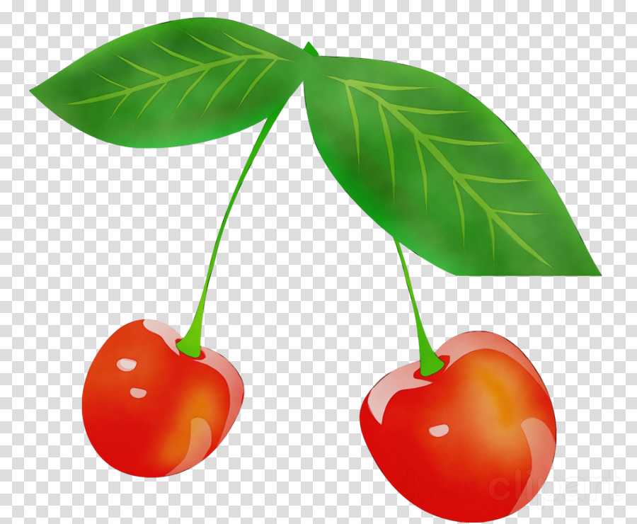 cherry line art drawing cartoon logo