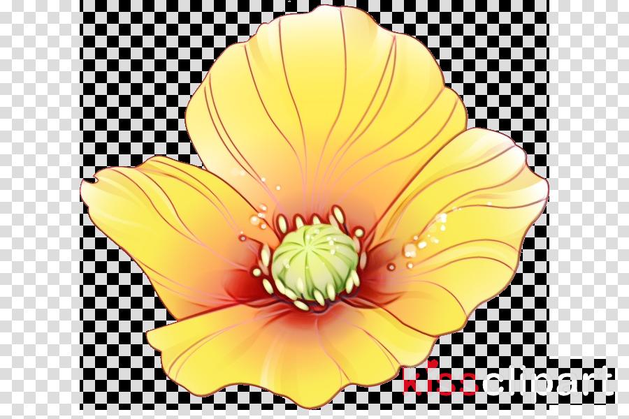 petal cut flowers yellow flower herbaceous plant