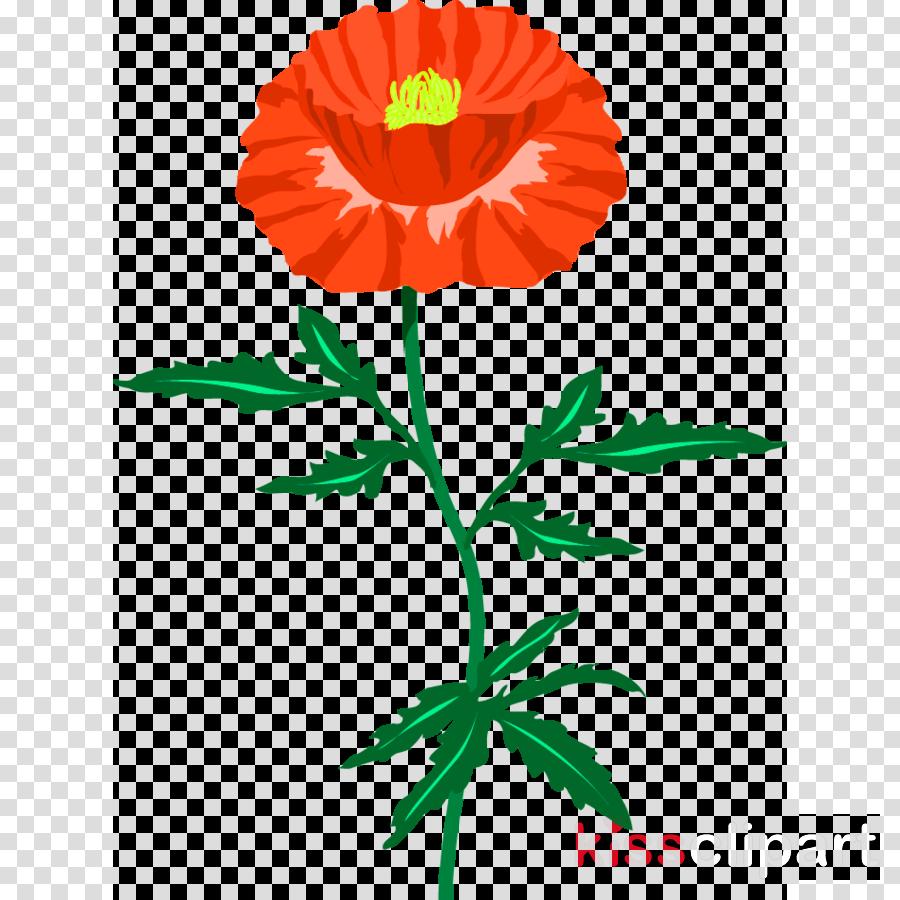 Red Poppy Flower Poppy Flower