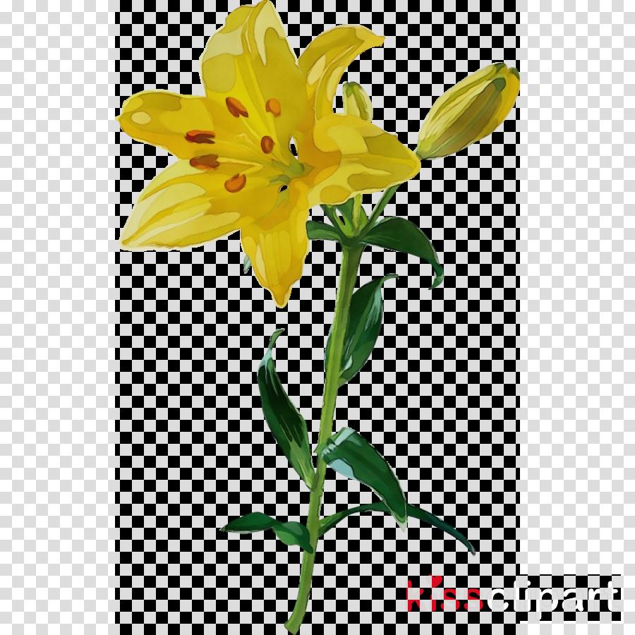 plant stem cut flowers daylilies yellow petal