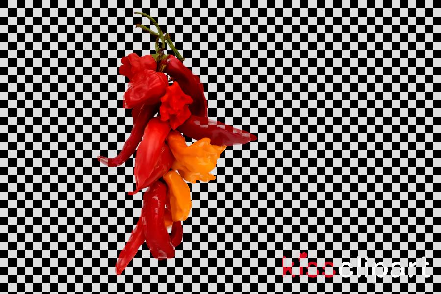 habanero tabasco pepper cayenne pepper malagueta pepper peppers