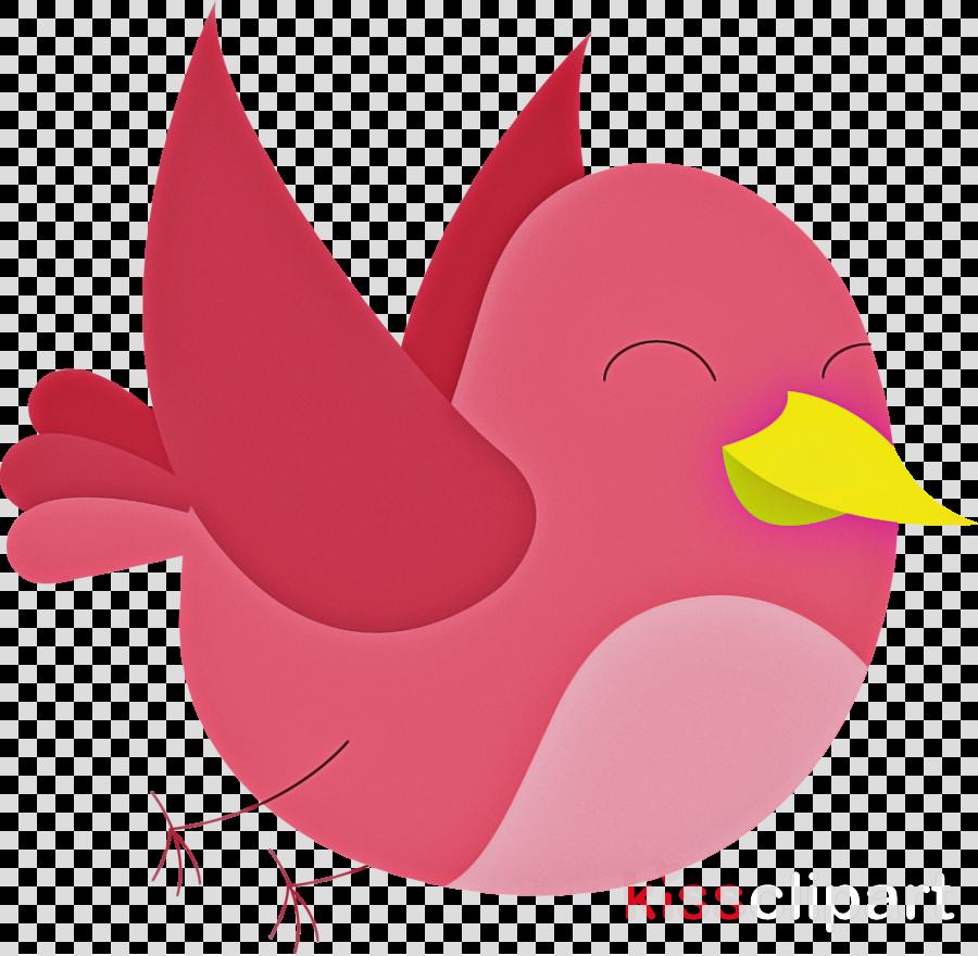 rooster ducks chicken birds water bird