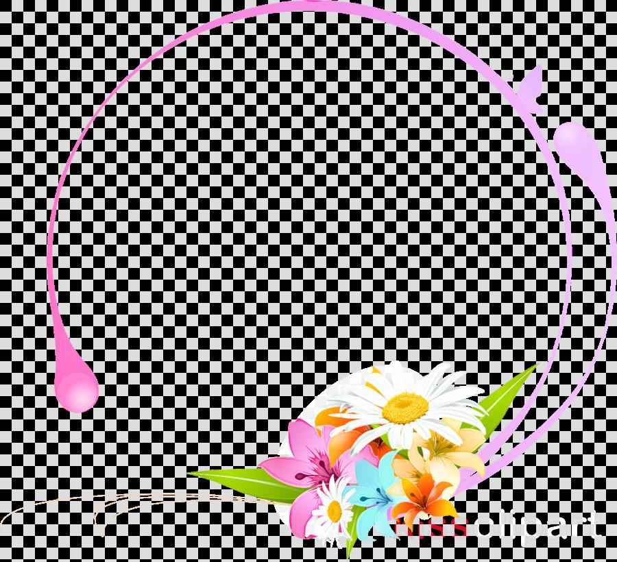 Gerbera daisy marguerite
