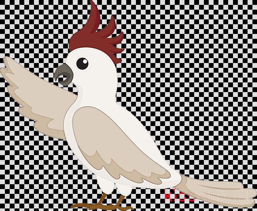 rooster birds chicken beak parrots