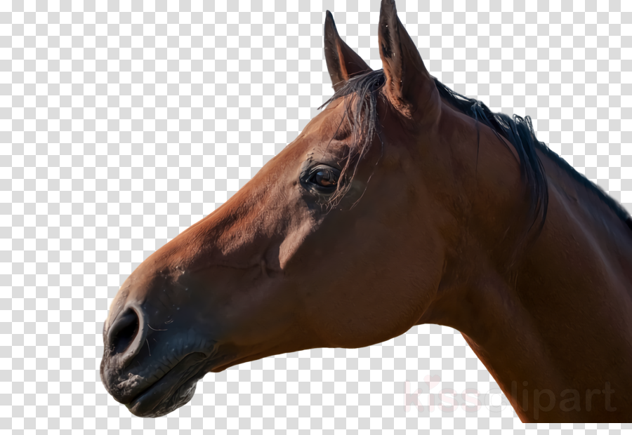 mustang stallion halter horse harness rein