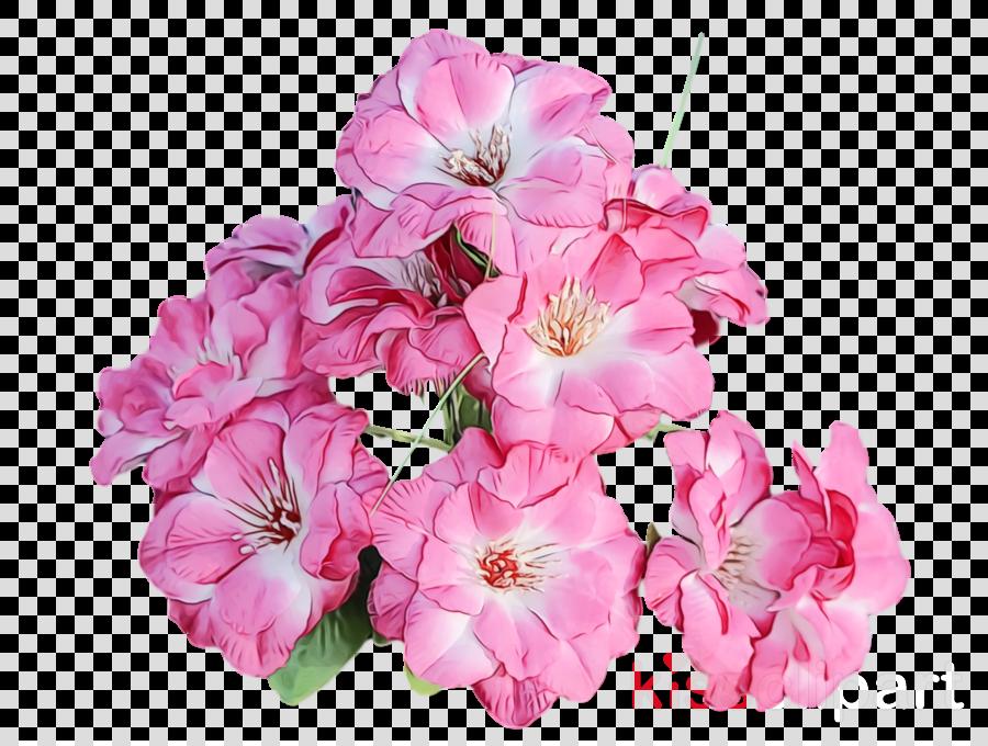 annual plant cut flowers mallows herbaceous plant geranium m