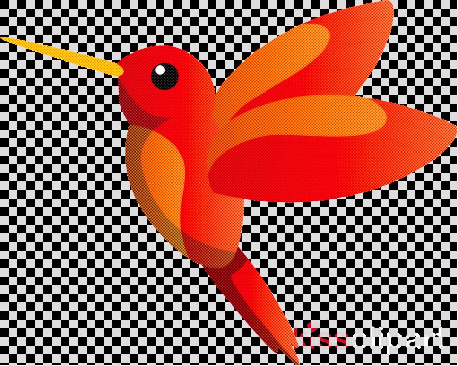 hummingbirds birds beak rufous hummingbird stork