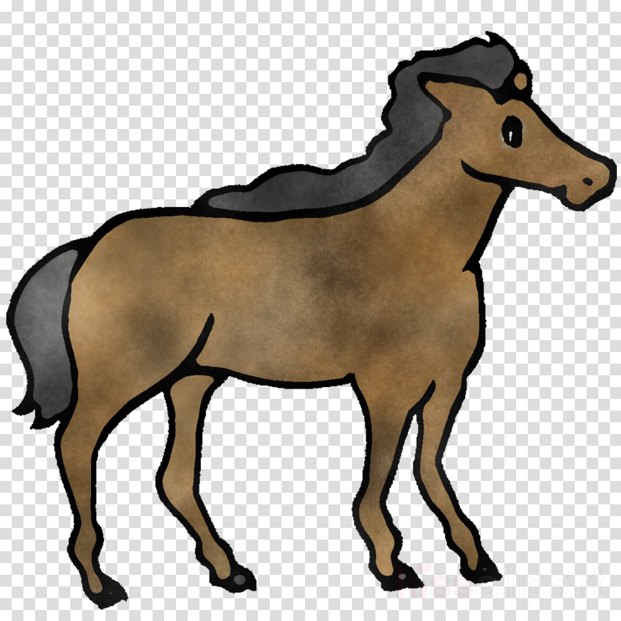 mustang american paint horse stallion american quarter horse arabian horse