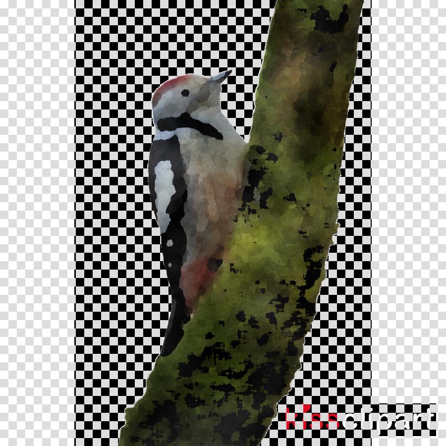 woodpeckers beak