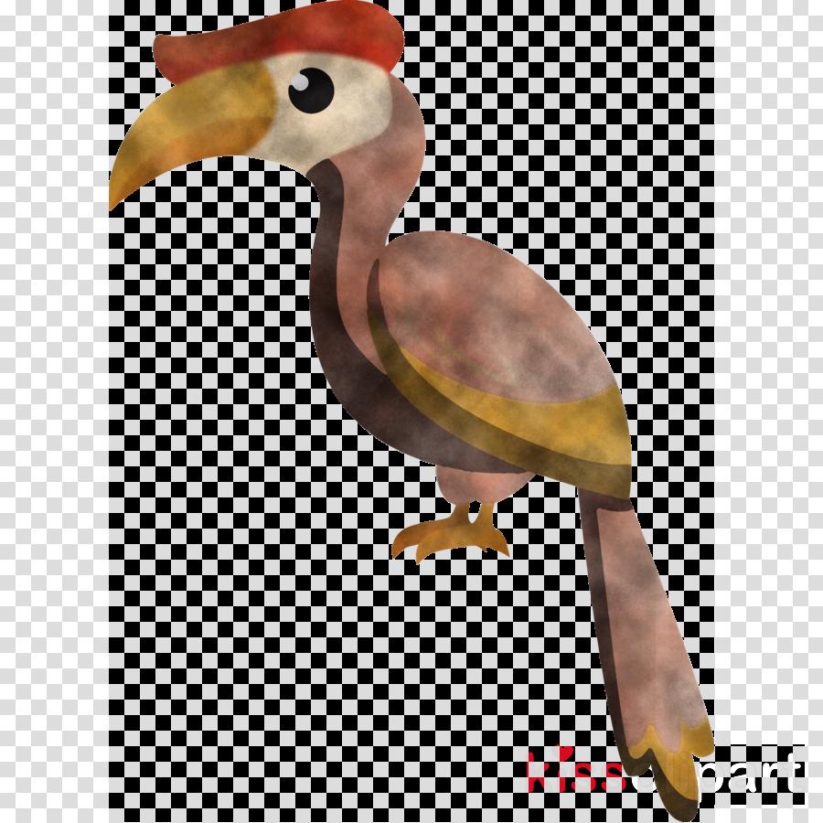 birds toucans hornbill parrots toco toucan