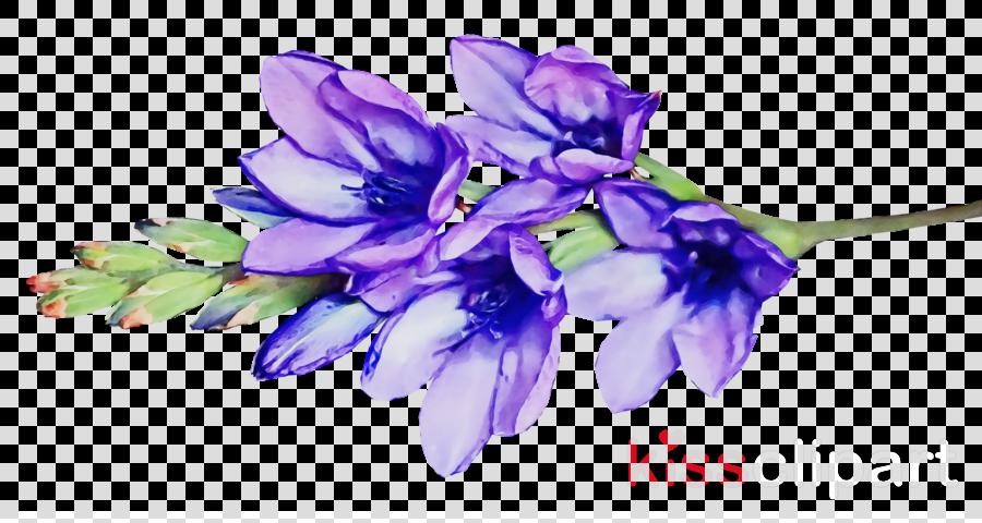 hyacinth flower common water hyacinth cut flowers violet
