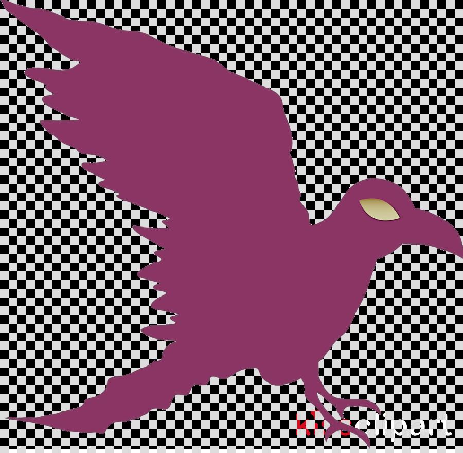 bald eagle birds falcon golden eagle ducks