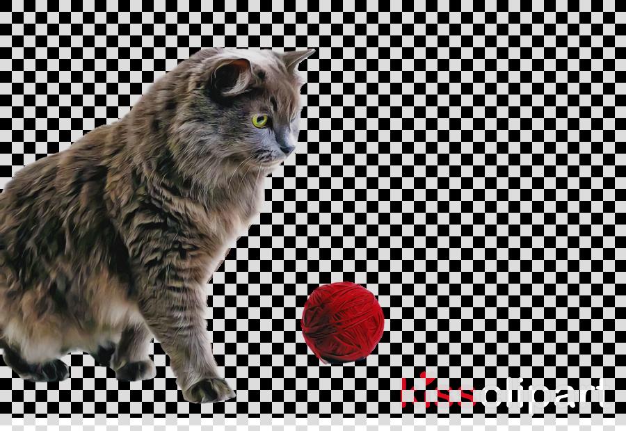 whiskers manx cat kurilian bobtail nebelung european shorthair