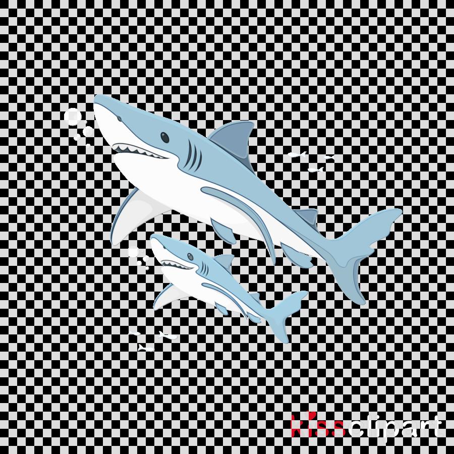 dolphin cetaceans sharks requiem sharks porpoise
