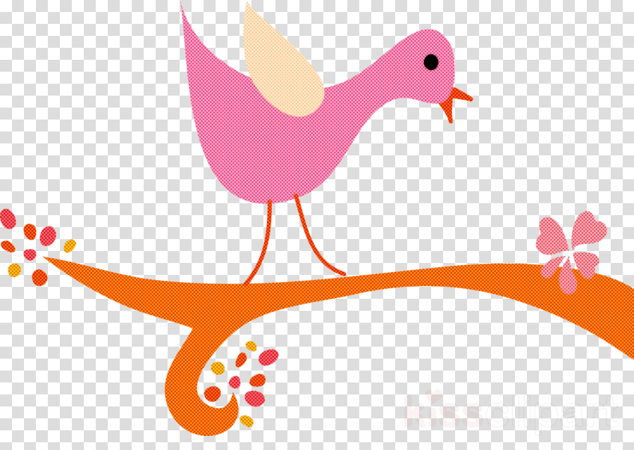 landfowl ducks birds duck beak