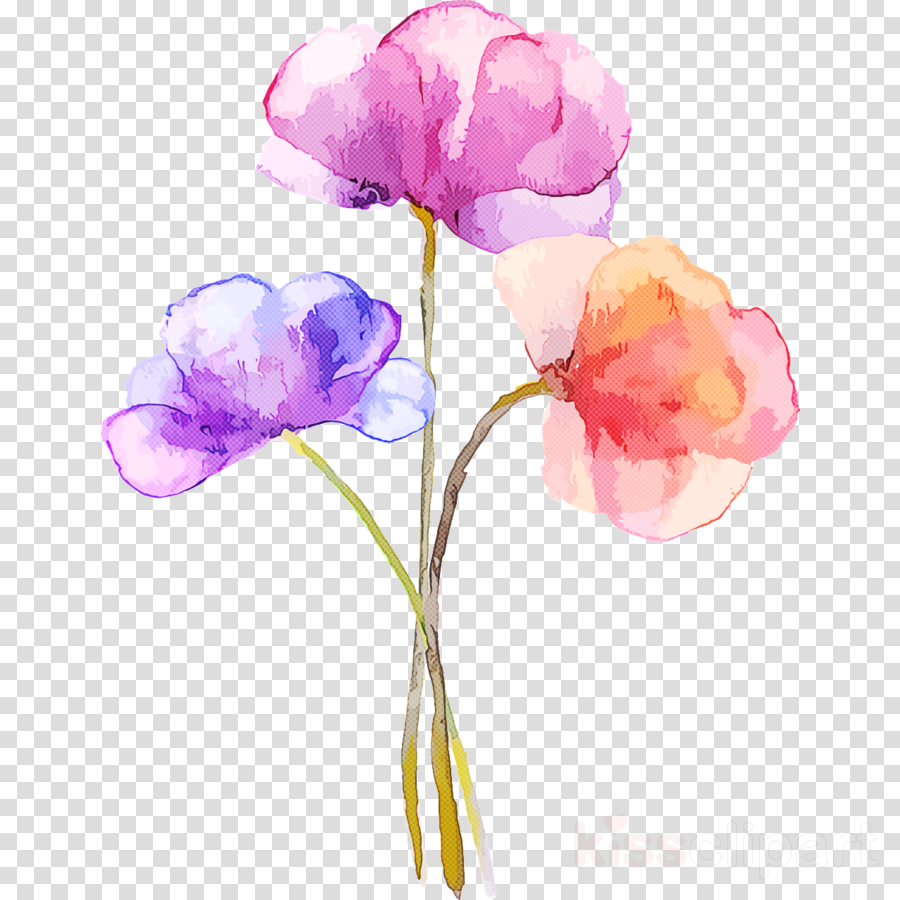 plant stem cut flowers tulip moth orchids still life photography