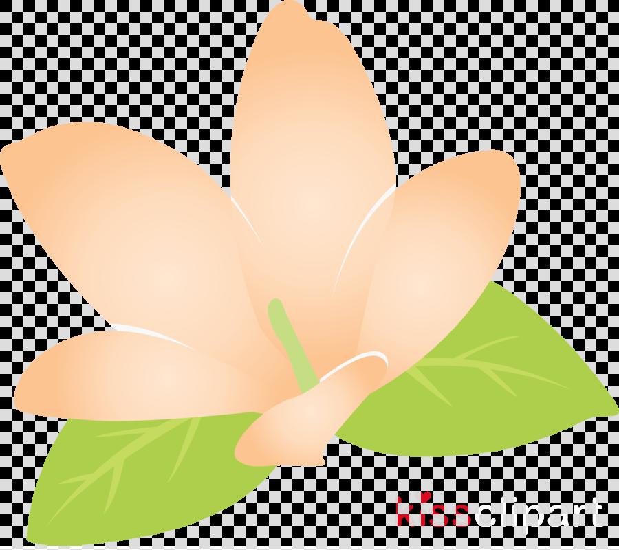 jasmine jasmine flower