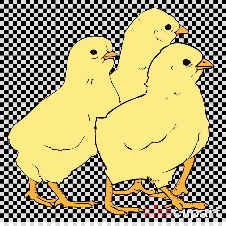 chicken landfowl birds ducks grey geese