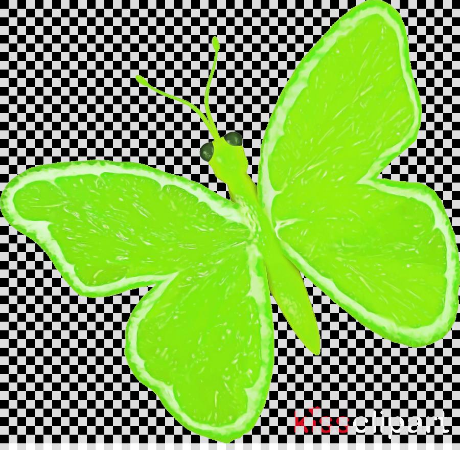butterflies brush-footed butterflies leaf plant stem green
