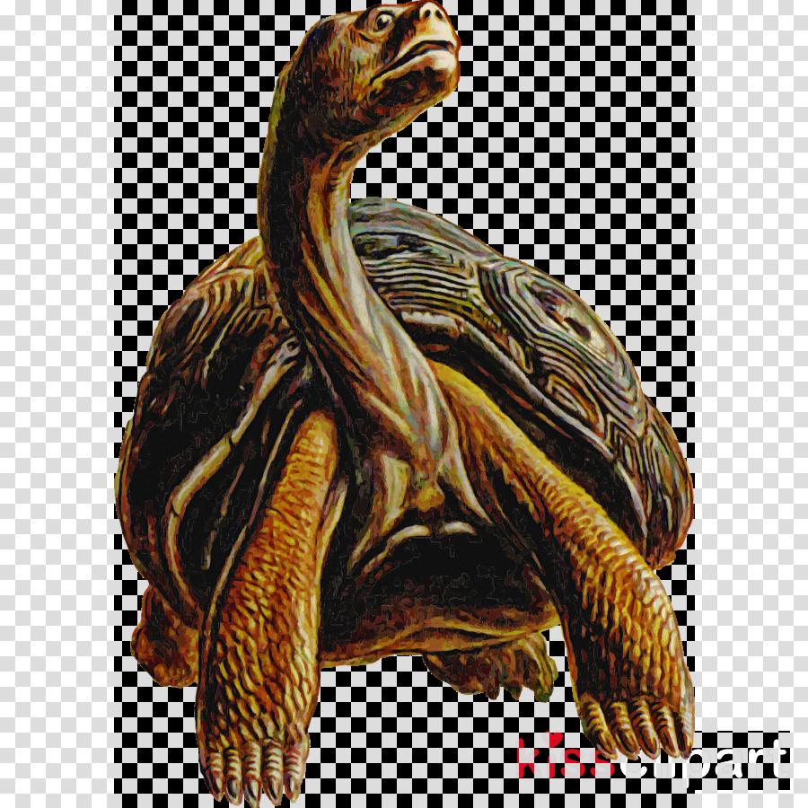 tortoise pond turtles turtles sea turtles sea